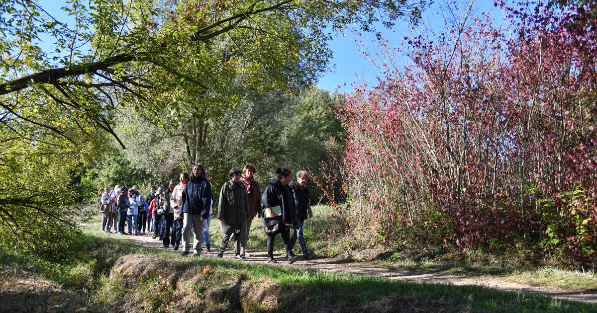 Balade botanique marche en forêt