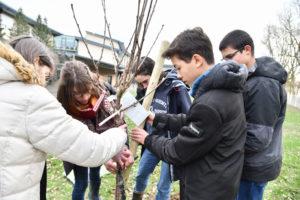 Plantation d'un cerisier par les éco-délégués